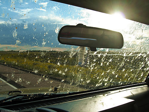 Are You Sick Of Bug Splats On Your Windshield?